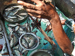 Fish market in Calcutta